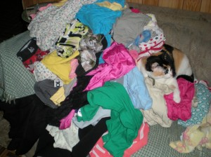 Before clothes are sorted