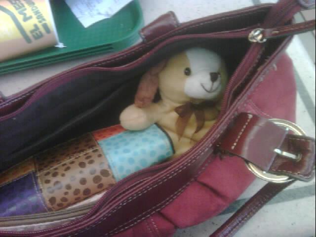 Fletcher, my personal stowaway
